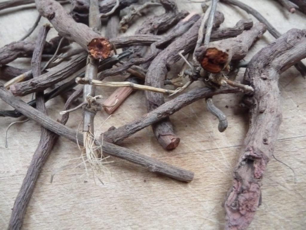 7 Wurzeln der Krapppflanze